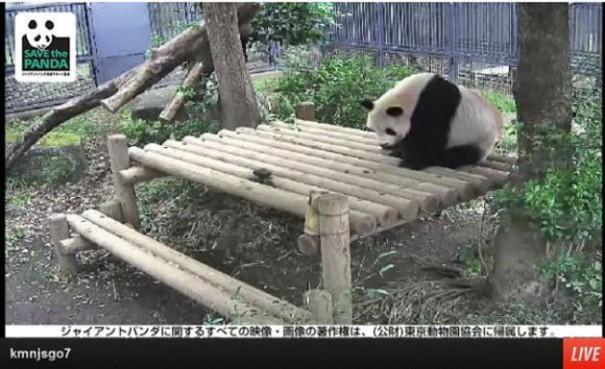 pandas zoo ueno