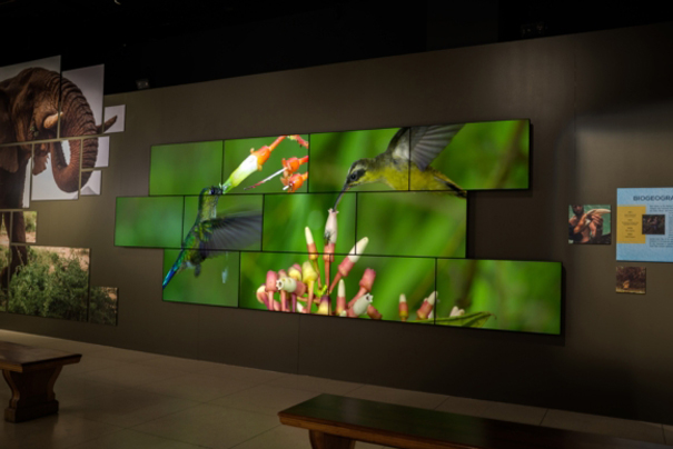 Videowall Planar National Geographic Museum Washington