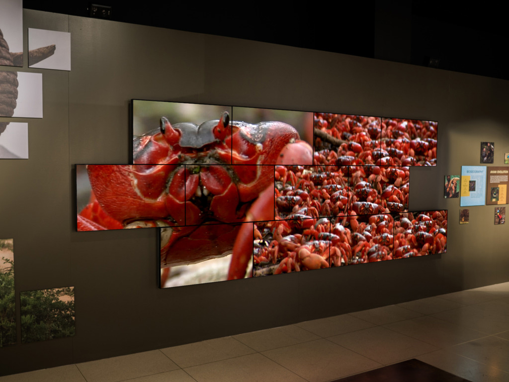 planar installs a video wall of irregular format at the national geographic museum in washington
