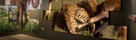 Planar instala un videowall de formato irregular en el National Geographic Museum de Washington