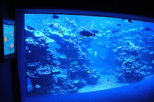 AOPEN en Palma Aquarium