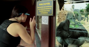 Zoo Madrid instala app para Google Glass
