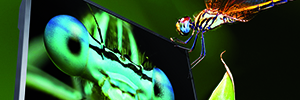 Pantalla de 85 pulgada UHD con 50/60 Hz de Eyevis para aplicaciones de señalización digital