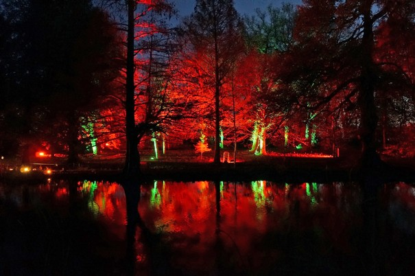 Elation Enchanted Woodland Woodland Lightshow