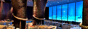A great interactive video wall, simulating a virtual aquarium, presides over the Japanese restaurant Yubari