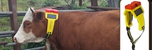 Telefónica Business Solutions brings the benefits of IoT to the livestock industry