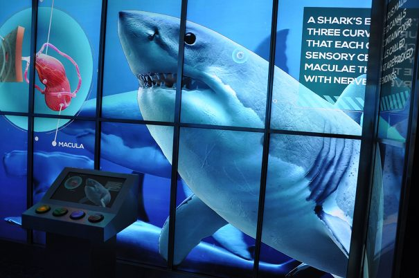 BrightSign y DigiComm Dubai Aquarium Underwater Zoo