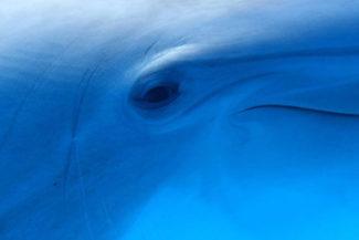 Universidad Rockefeller Hunter College delfines