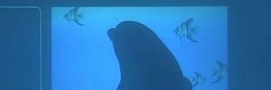 Pantalla táctil subacuática para que los delfines interactúen e investigar su comportamiento