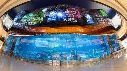 lg oled Dubai Mall Emaar Properties