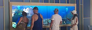 El hotel La Pinta instala un acuario virtual que permite a los clientes interactuar con especies marinas