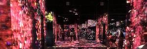 TeamLab bordeless: un museo digital sin fronteras que fusiona tecnología y arte a gran escala